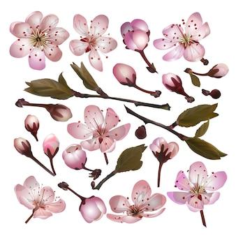 Zestaw blossoming sakura różowych kwiatów i liści na białym tle na wiosnę kartkę z życzeniami, baner, tapetę lub plakat. ilustracja wektorowa
