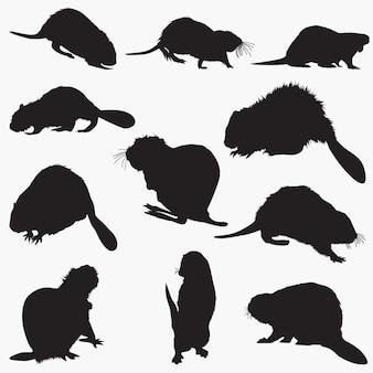 Zestaw bobrów sylwetki