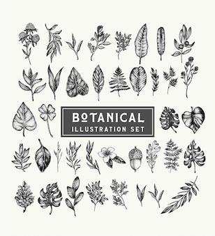 Zestaw botaniczny vintage rośliny i kwiaty. piękne ilustracje ręcznie rysowane w stylu stippling. pojedyncze elementy do projektowania graficznego, przezroczyste obiekty clipart dla twojej kreatywności.