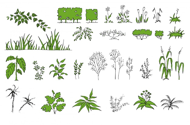 Zestaw botaniczny z liśćmi. paproć, eukaliptus, bukszpan. vintage kwiatowy zestaw