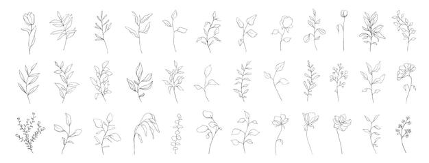 Zestaw botanicznych linii sztuki kwiatowy liści, roślin. ręcznie rysowane gałęzie szkicu na białym tle. ilustracja wektorowa