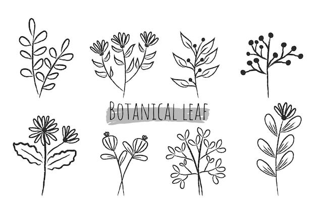 Zestaw botanicznych liści doodle wildflower line art