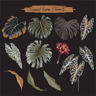 Zestaw botanicznych liści tropikalnych liści