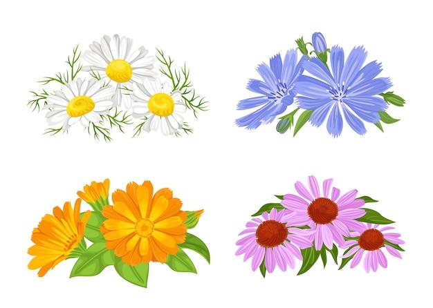 Zestaw bukietów kwiatów leczniczych.