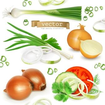 Zestaw cebuli, realistyczne elementy wektorowe