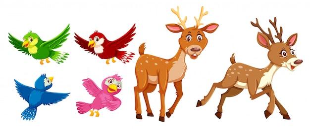 Zestaw charakter jelenie i ptak