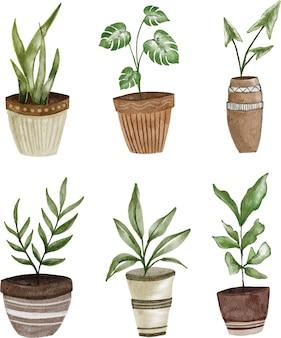Zestaw clipartów doniczkowych roślin