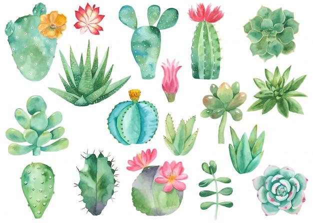 Zestaw clipartów kaktusów