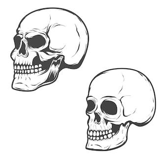 Zestaw czaszek na białym tle.