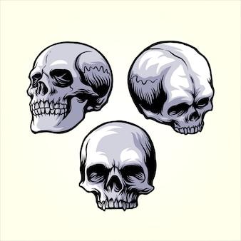 Zestaw czaszek