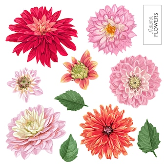 Zestaw czerwonych kwiatów astry. tropikalne elementy kwiatowe do dekoracji, wzór, zaproszenia, tapety. zwrotnik kwiatów botaniczny tło. ilustracja wektorowa