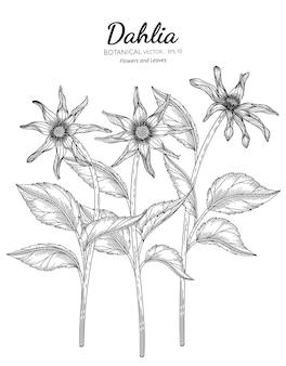 Zestaw dahlia kwiat i liść ręcznie rysowane ilustracja botaniczna z grafiką liniową
