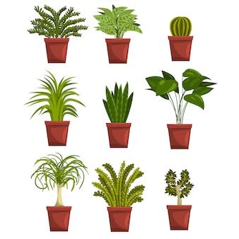 Zestaw doniczkowych zielonych roślin liściastych z liśćmi. sansevieria, kaktus, pipal, bonsai, palma. rośliny domowe hobby ogrodnicze. na białym tle