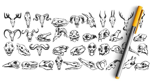 Zestaw doodle czaszki na białym tle