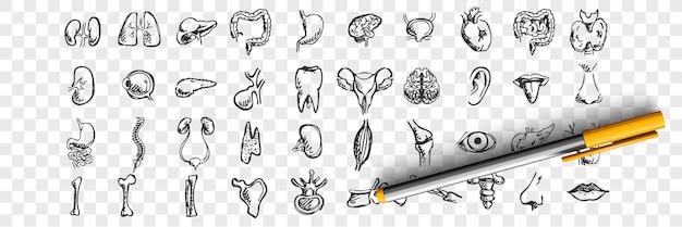 Zestaw doodle narządów ludzkich. zbiór ręcznie rysowane szkice szablony wzory męskiej żeńskiej wątroby serce płuca nerki usta język nos oczy na przezroczystym tle. ilustracja anatomiczna część ciała
