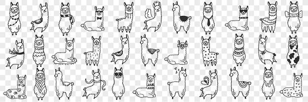 Zestaw doodle zwierząt śmieszne alpaki. kolekcja ręcznie rysowane różne śmieszne słodkie alpaki w różnych pozach, ciesząc się życiem na przezroczystym tle