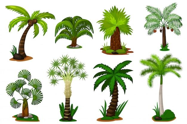 Zestaw drzew palmowych. palma kokosowa