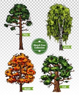 Zestaw drzew szkicu kolorów