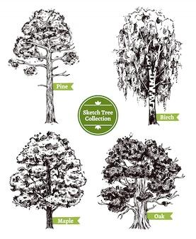 Zestaw drzew szkicu