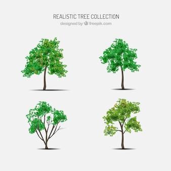 Zestaw drzew w realistycznym stylu