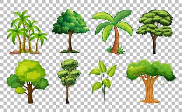 Zestaw drzewa na przezroczystym tle