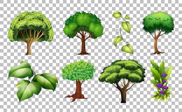 Zestaw drzewa na przezroczystym