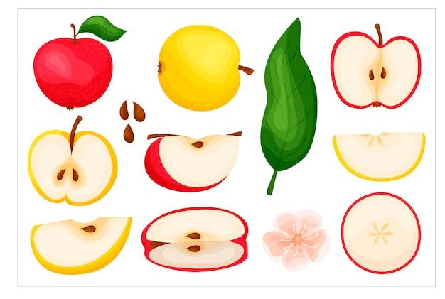 Zestaw dużych jabłek. pokrojone czerwone i żółte jabłko. ikona. w nowoczesnym stylu mieszkania. zestaw elementów. koncepcja owoców.