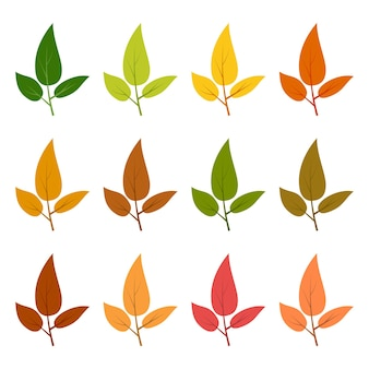 Zestaw dwunastu jesiennych liści w różnych jesiennych kolorach. ilustracja wektorowa.