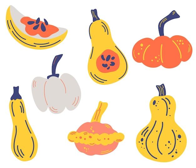 Zestaw dyni. różne dynie. plastry, połówki, cukinia, kabaczek. jesienny nastrój. zdrowe warzywa. jedzenie wegetariańskie, wegańskie. żniwny. elementy dziękczynienia i halloween. ilustracja wektorowa