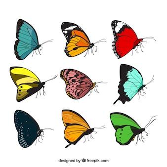 Zestaw dziewięciu motyli z różnych wzorów