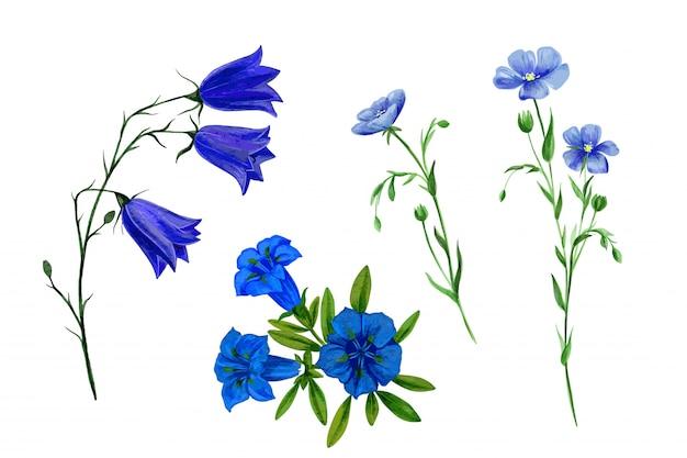 Zestaw dzikich kwiatów polnych i ziół, akwarela
