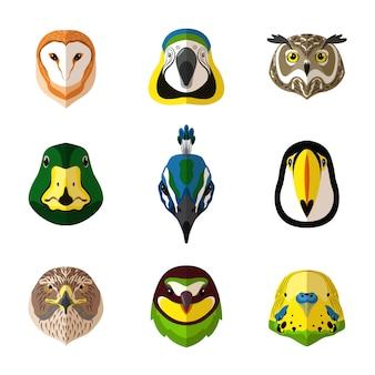 Zestaw dzikich ptaków