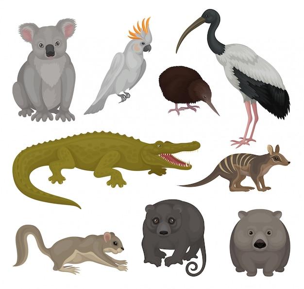 Zestaw dzikich zwierząt i ptaków australijskich. motyw fauny. szczegółowe elementy plakatu zoo lub książki dla dzieci