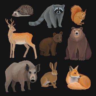 Zestaw dzikich zwierząt leśnych na północy, jeż, szop, wiewiórka, jeleń, lis, niedźwiadek, dzik