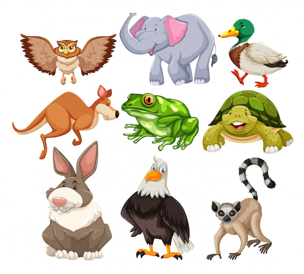 Zestaw dzikich zwierząt