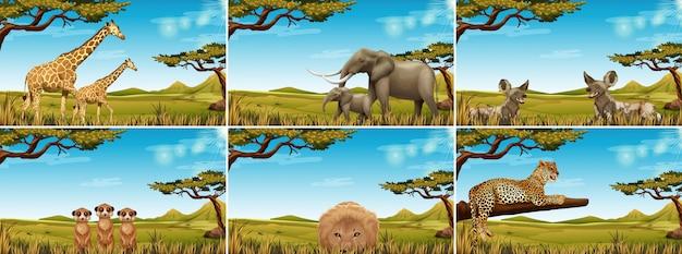 Zestaw dzikiej przyrody w sawannie