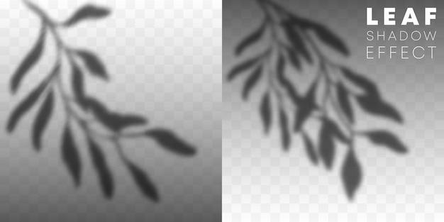 Zestaw efektu nakładki cienia liści na przezroczystym.