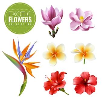 Zestaw egzotycznych kwiatów raelistycznych. kolekcja tropikalnych kwiatów na białym tle elementy hibiskusa magnolia strelitzia plumeria