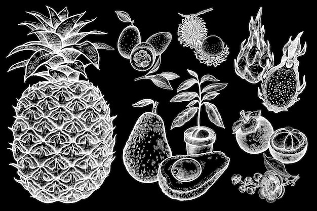 Zestaw egzotycznych owoców w stylu vintage. biała kreda na czarnej tablicy