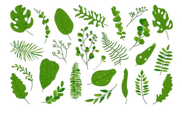 Zestaw egzotycznych zielonych liści tropikalnych. ręcznie rysowane różnych streszczenie dżungli kwiatowy element botaniczny pozostawia palmy, monstera do kompozycji dekoracyjnych lub karta zaproszenie na białym tle
