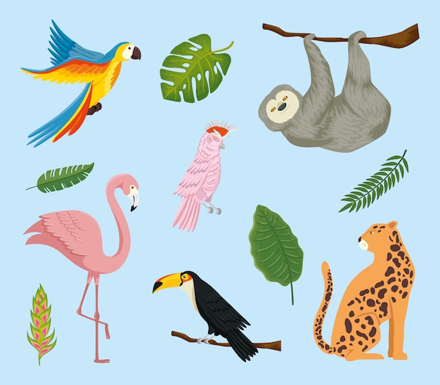 Zestaw egzotycznych zwierząt tropikalnych