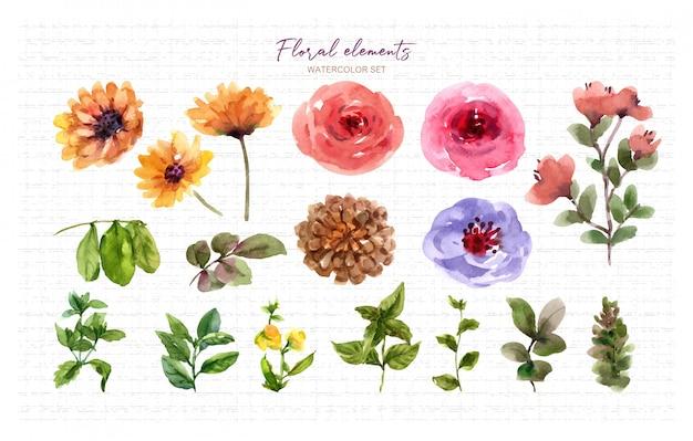 Zestaw elementów akwarela kwiatowy.