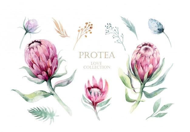 Zestaw elementów akwarela protea. tropikalne liście.