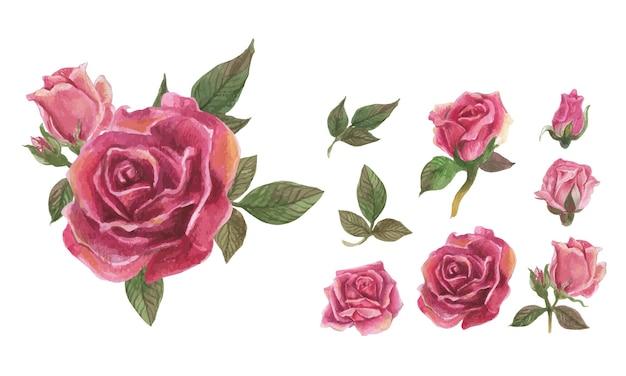 Zestaw elementów akwarela róża.