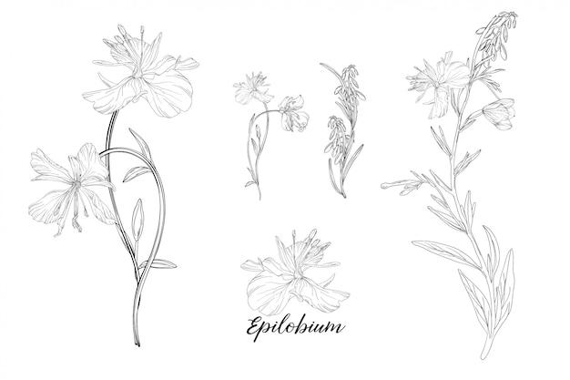 Zestaw elementów kwiatowych epilobium