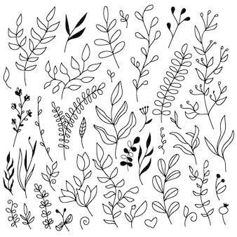 Zestaw elementów kwiatowych - liście i gałęzie.