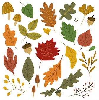 Zestaw elementów projektu jesień liści