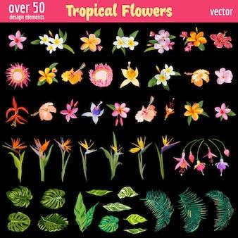Zestaw elementów projektu tropikalne kwiaty