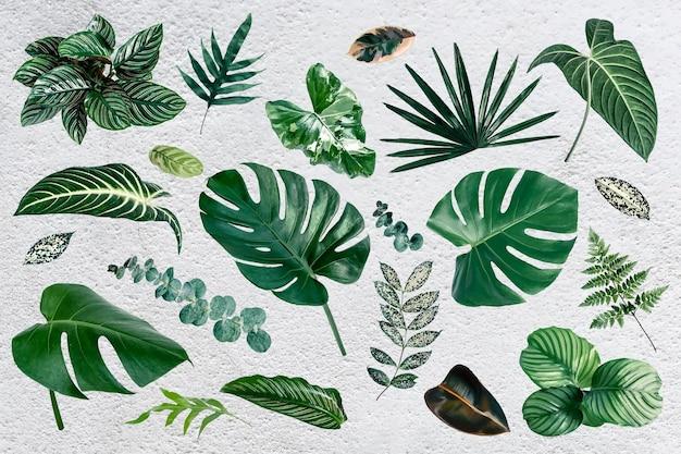 Zestaw elementów projektu zielonych liści tropikalnych