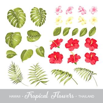 Zestaw elementów tropikalnych kwiatów.